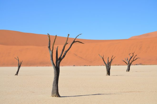 Un paysage du désert namibien.