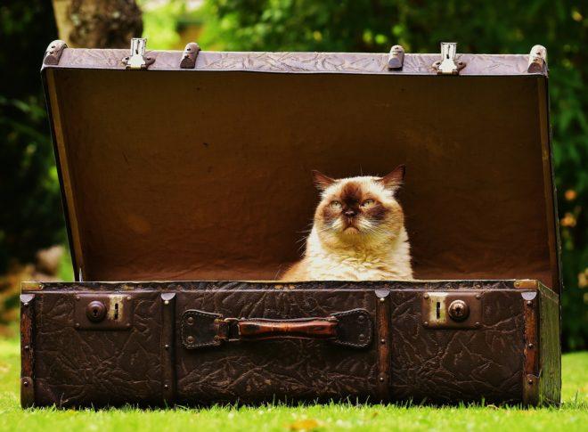 Photo d'illustration. Une valise.