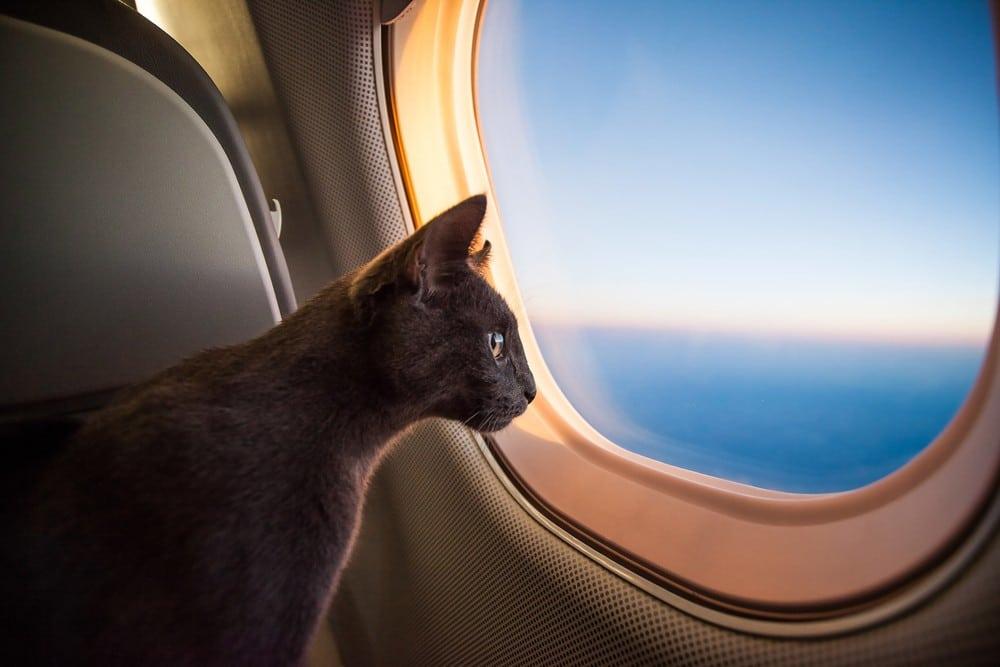 Illustration. Un chat dans un avion.
