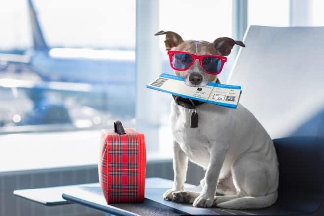 Un chien prêt à partir en voyage