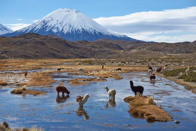 L'Altiplano, au nord du Chili.