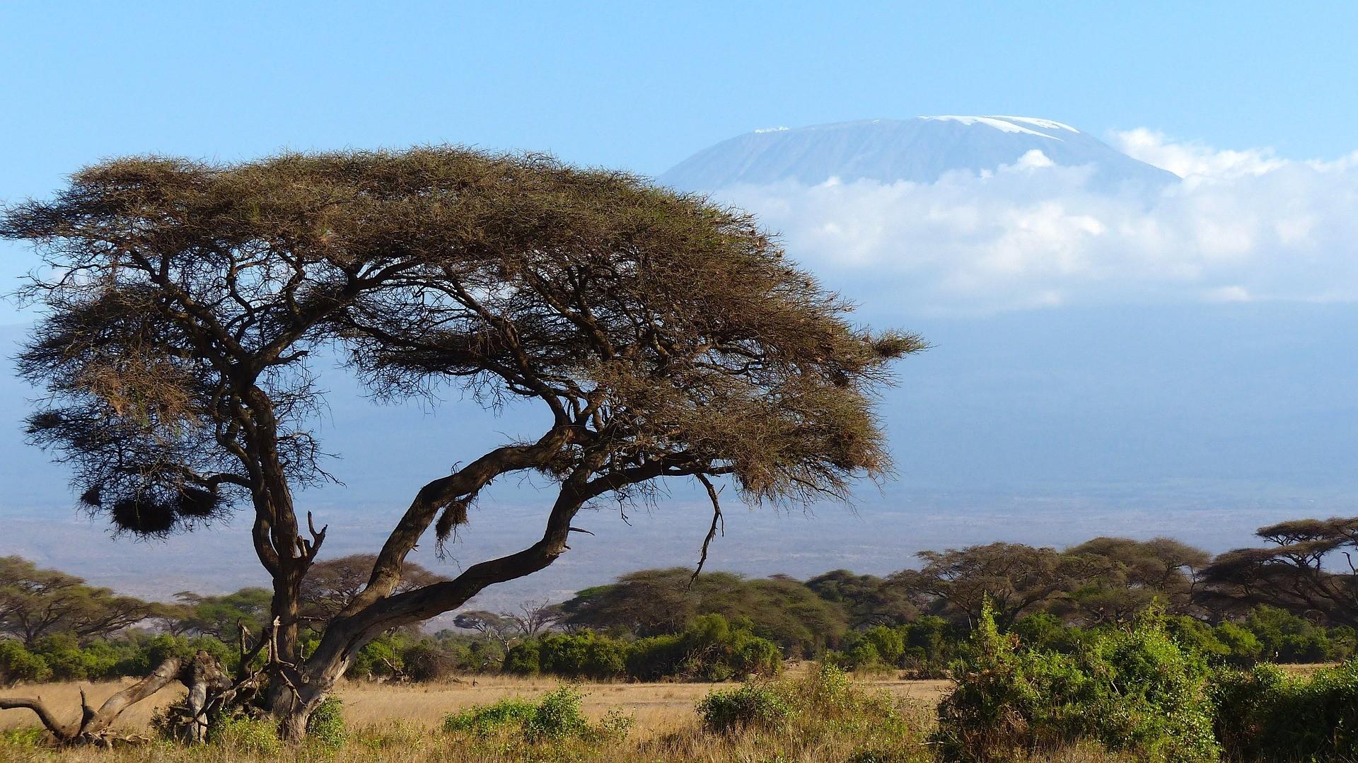 Le Kilimanjaro.