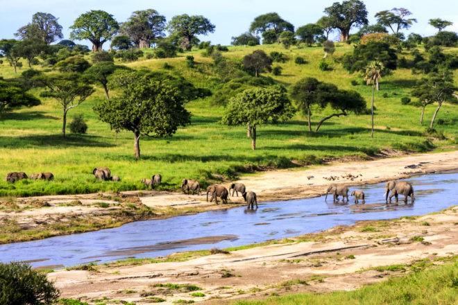 Des éléphants dans la parc national du Serengeti, en Tanzanie.