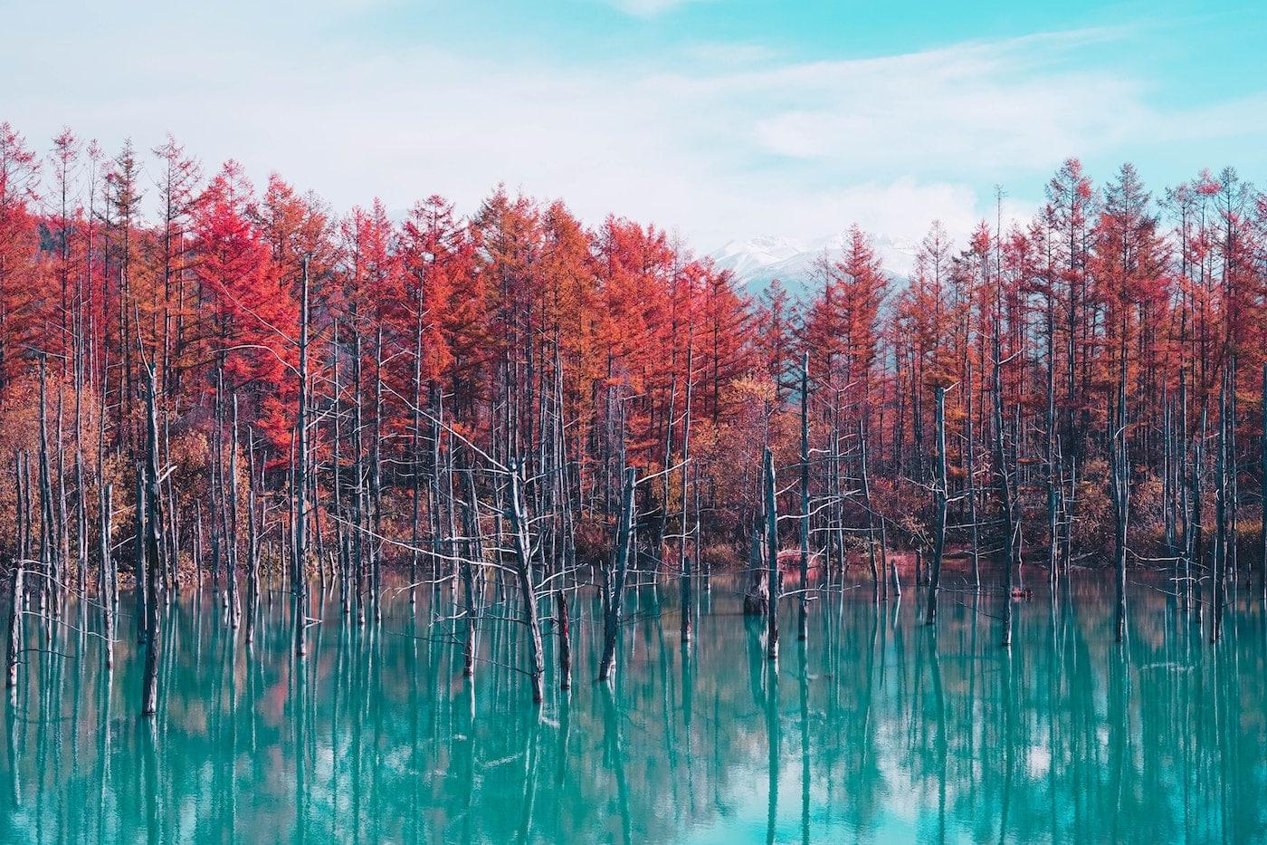 Blue Pond, Biei, Hokkaido (Japon)