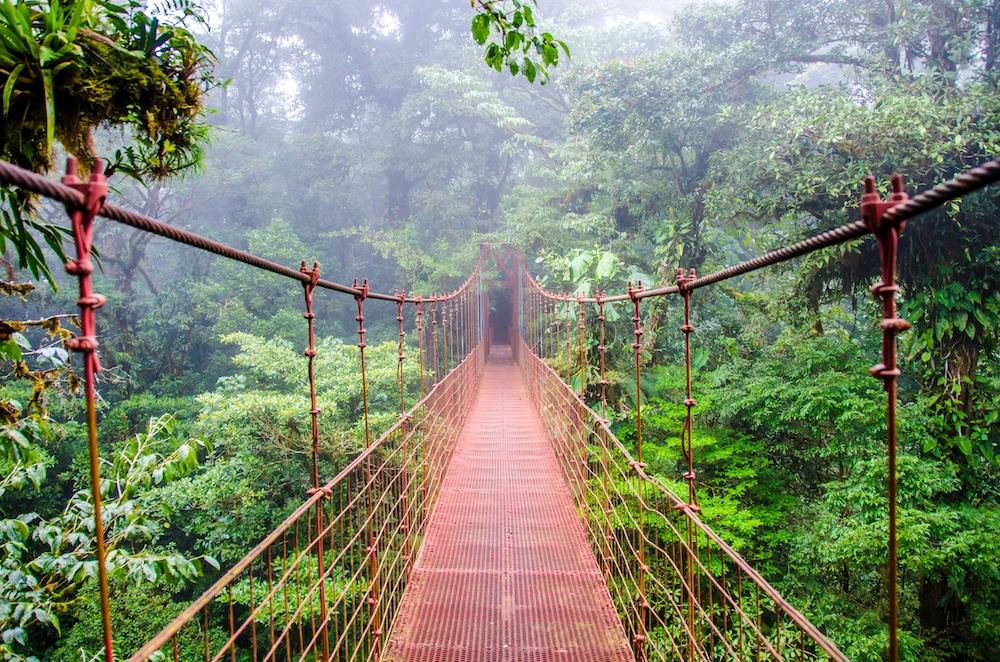 Un pont dans la forêt tropicale, Costa Rica.